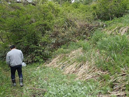 竹藪に移動