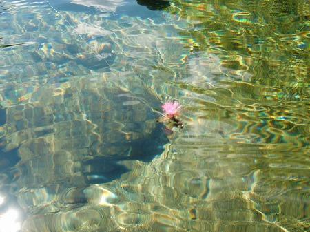 水面のフライ