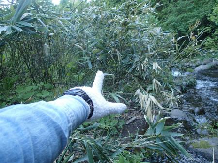 お気入りの竹藪