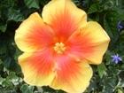 280813花のウォーク (9)