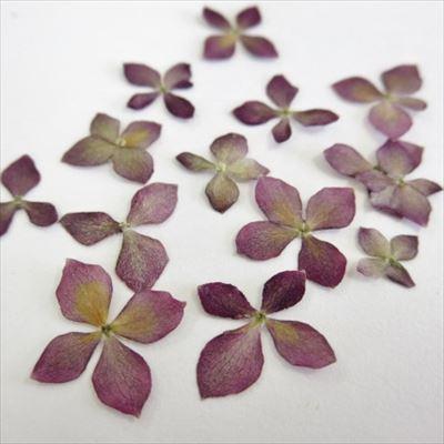 紫アジサイ2_R