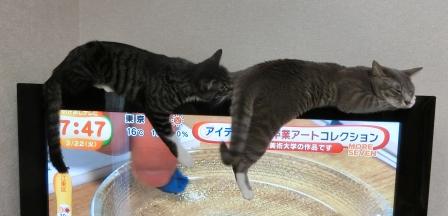 1500おしり (2)