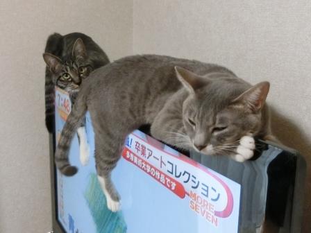 1500おしり (3)