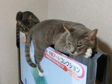 1500おしり (4)