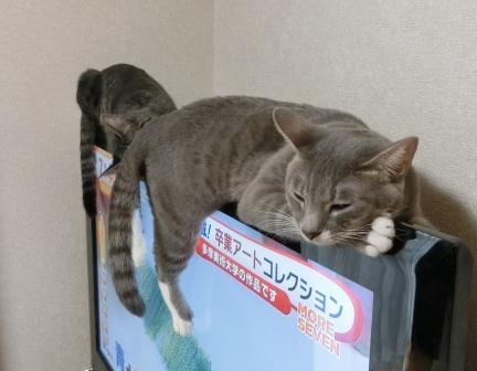 1500おしり (5)