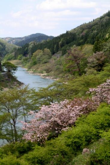 ⑬阿武隈川の春 (367x550)