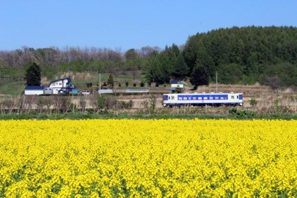 ⑦栗丘~栗沢菜の花畑