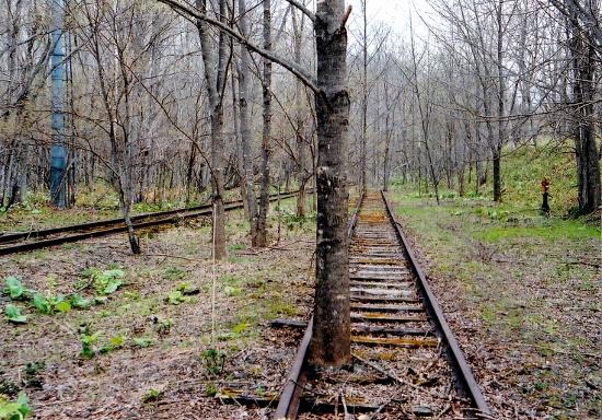 ⑦上茶路線路に立つ木