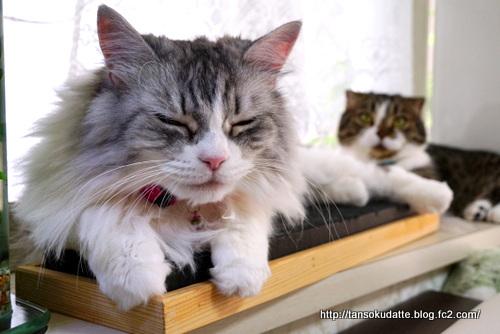 前ネコと後ネコ