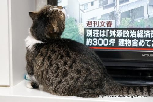 DSC00011G.jpg
