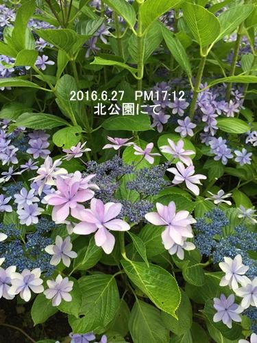 IMG_3768-1.jpg