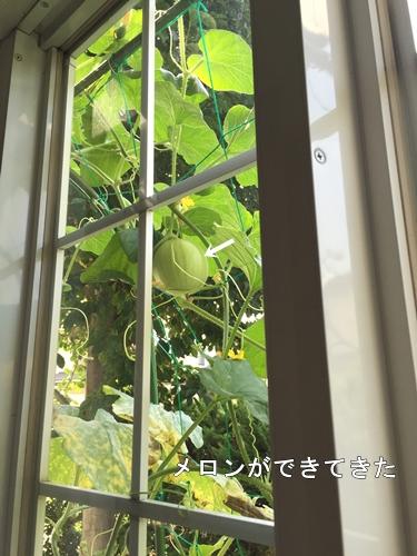 IMG_3873-1.jpg