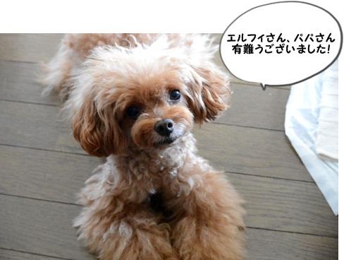 DSC_4096.jpg