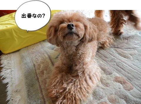 DSC_4640.jpg