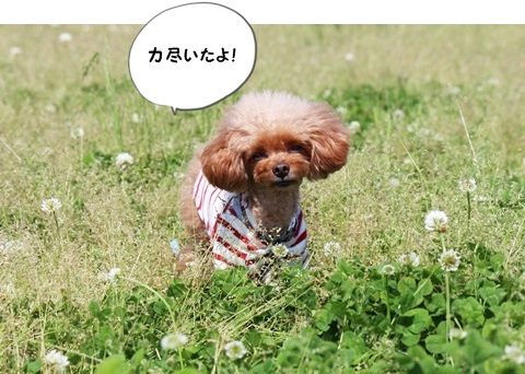 IMG_2904_2016050607413614f.jpg