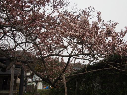 20160410・妙高2-05