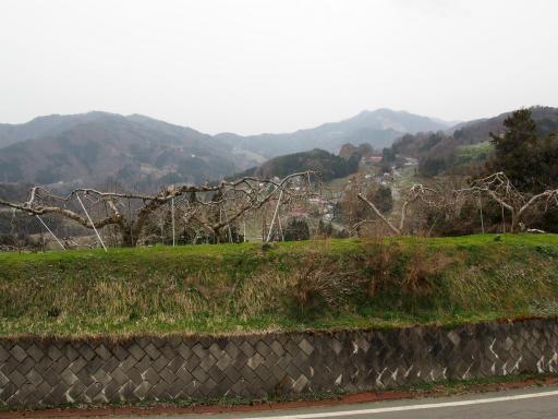 20160410・妙高2-10・リンゴの木