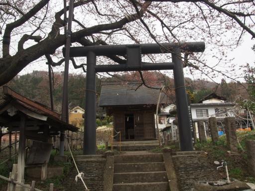 20160410・妙高空1-13・素桜神社神代桜・大