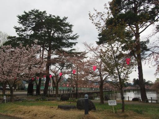 20160411・妙高8-05・茨城県日立(オオヤマザクラ)