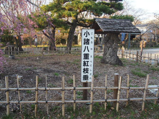 20160411・妙高9-10