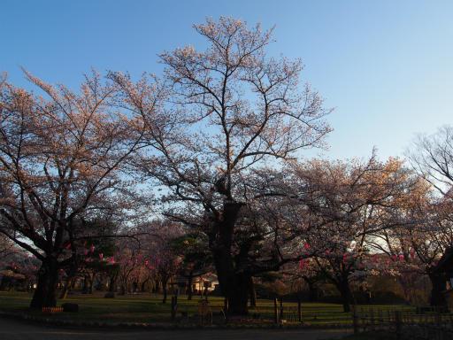 20160411・妙高9-09・観測の木