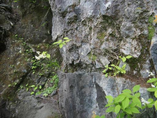 20160529・群馬ツツジ旅3-21・スルス岩への道でなさそう