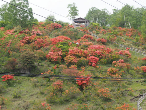 20160529・群馬ツツジ旅5-05・赤城見晴山