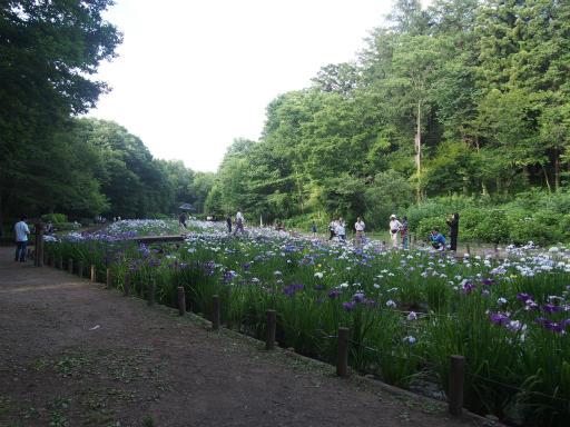 20160605・智光山公園1-08