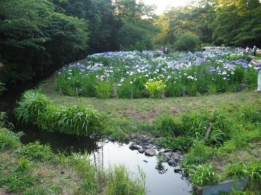 20160605・智光山公園2-23
