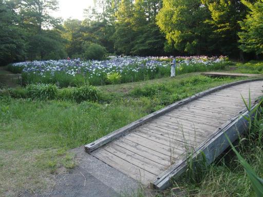 20160605・智光山公園2-24