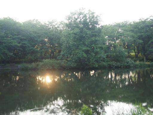 20160605・智光山公園3-09