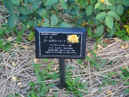 20160605・智光山公園植物12・中