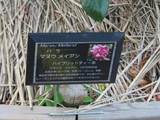 20160605・智光山公園植物10・中