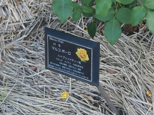 20160605・智光山公園植物18・中