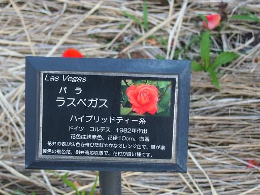 20160605・智光山公園植物16・中