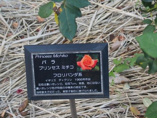 20160605・智光山公園植物20・中