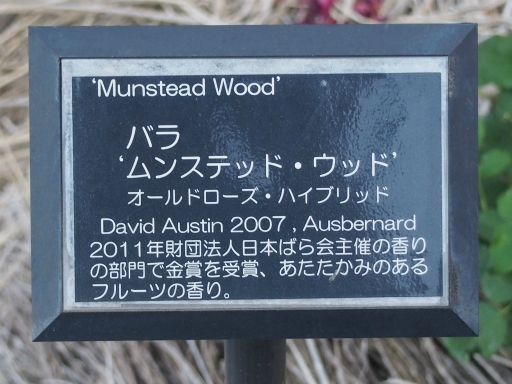 20160605・智光山公園植物30・中