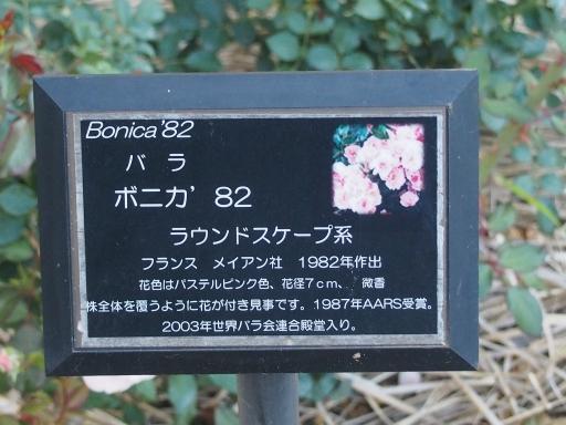 20160605・智光山公園植物28・中