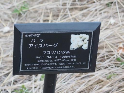20160605・智光山公園植物26・中