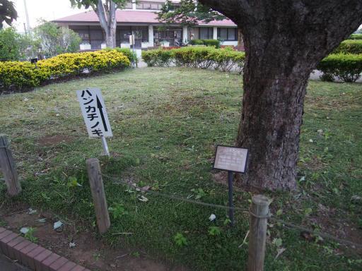 20160605・智光山公園植物35