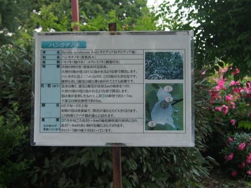 20160605・智光山公園植物34・大