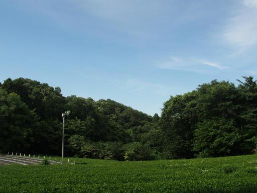 20160710・狭山湖散歩07