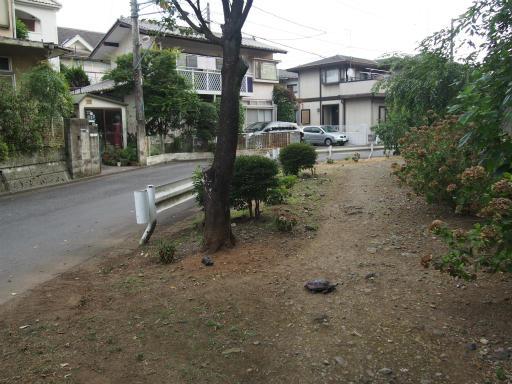 20160813・カメさん散歩12・空4