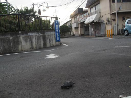 20160813・カメさん散歩10・空2