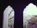 国立博物館大島桜