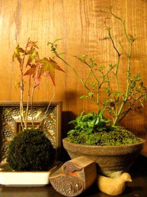 160508-盆栽
