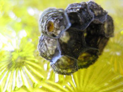 160612-蜂の巣