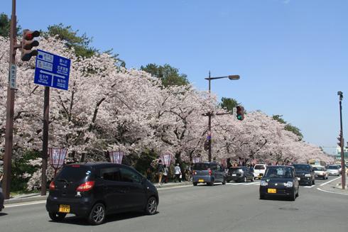 弘前桜祭り2016(1)-1