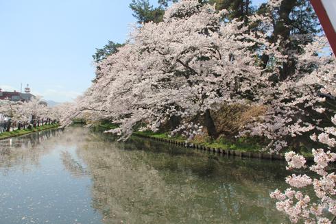 弘前桜祭り2016(1)-2