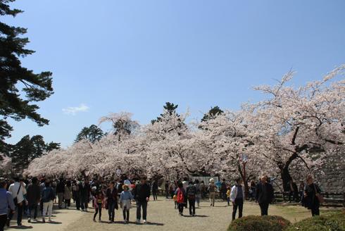 弘前桜祭り2016(1)-4